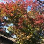 筑波山の紅葉の見ごろは?2018の口コミ!紅葉時期はいつ?