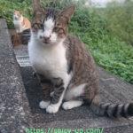 猫がカリカリを残すのはなぜ?グルメな野良猫が唯一食べてくれたカリカリ